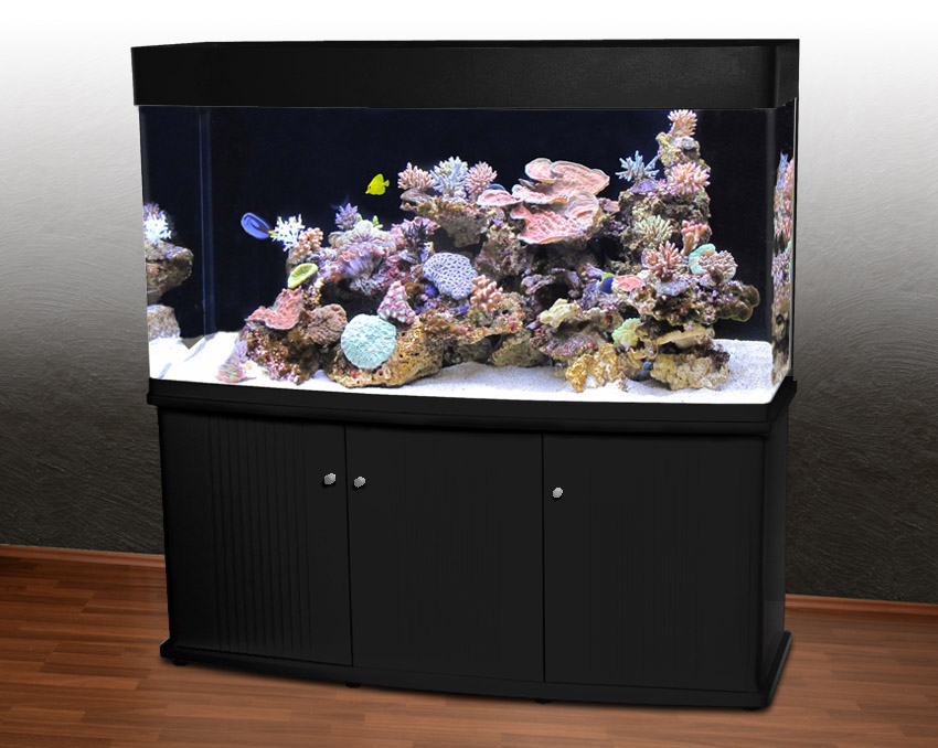 aquarium rückwand schwarz