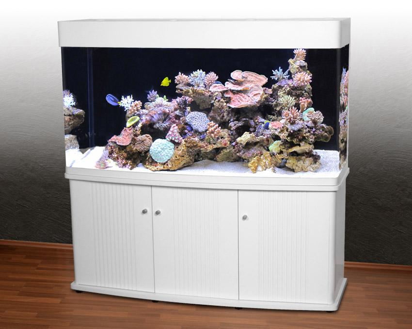 rg 150 panorama aquarium t5 meerwasseraquarium 500 liter wei furth im wald. Black Bedroom Furniture Sets. Home Design Ideas